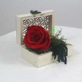 Ilgai žydinčios rožė...