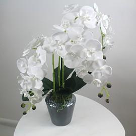 Balta dirbtinė orchidėja...