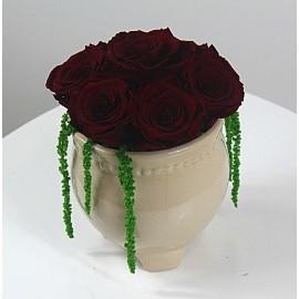 7 Miegančios rožės vazonėlyje