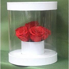 Miegančios rožės cilindro...