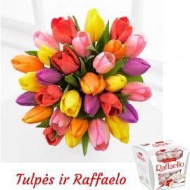 Tulpių puokštė ir Raffaelo